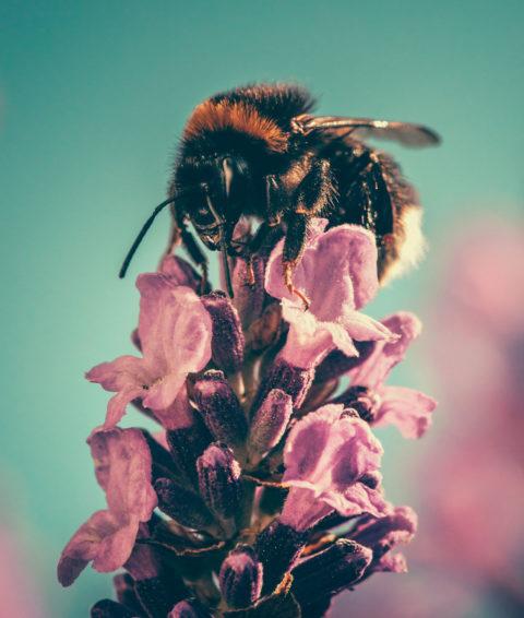 Chi siamo Saving Bees