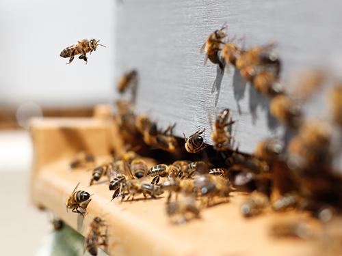 Cose che devi sapere sulle api