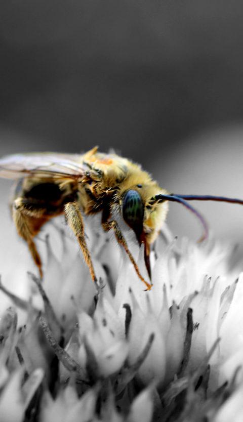 Oasi Apistica Saving Bees
