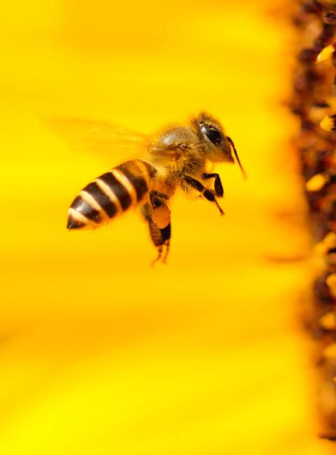 Le nostre amiche api Saving Bees