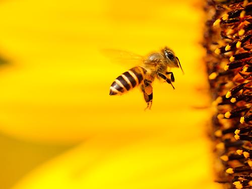 Perchè sono importanti le api