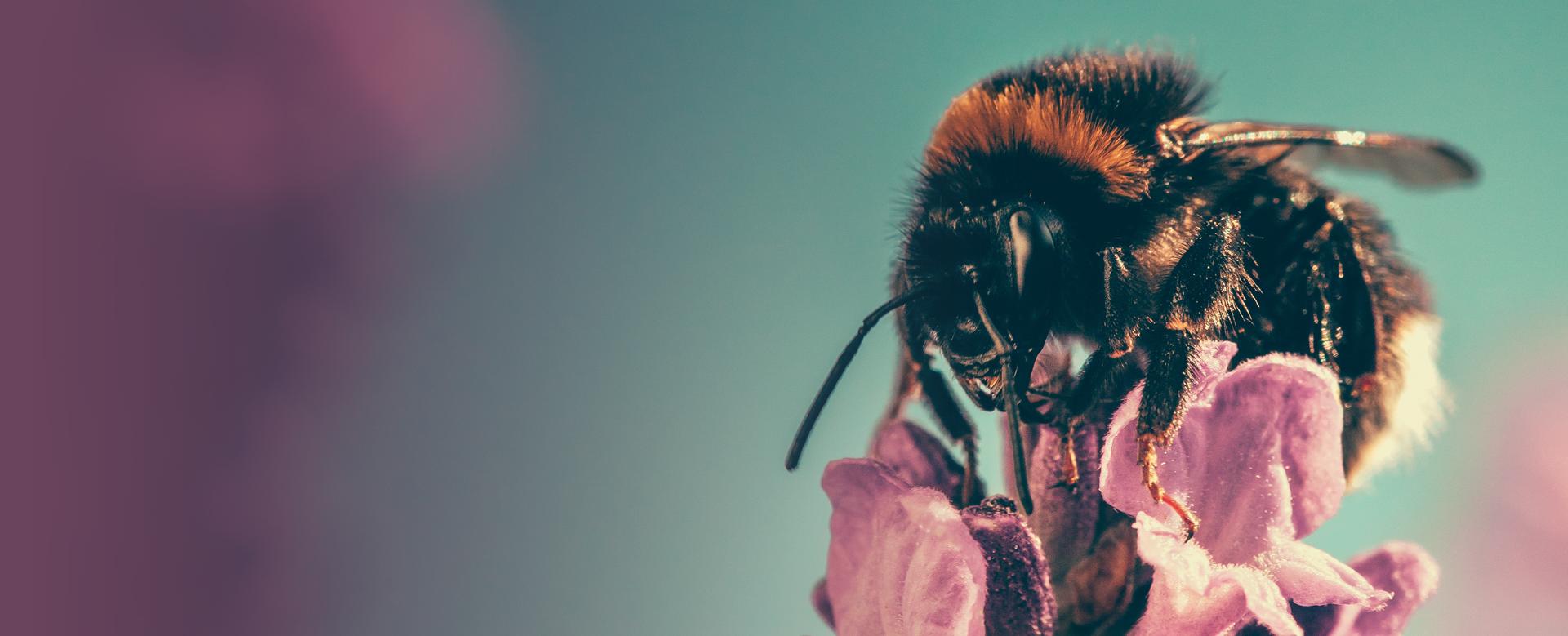 Saving Bees foto slider