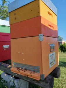 Italtrade saving bees
