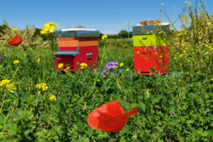 saving bees adotta arnia