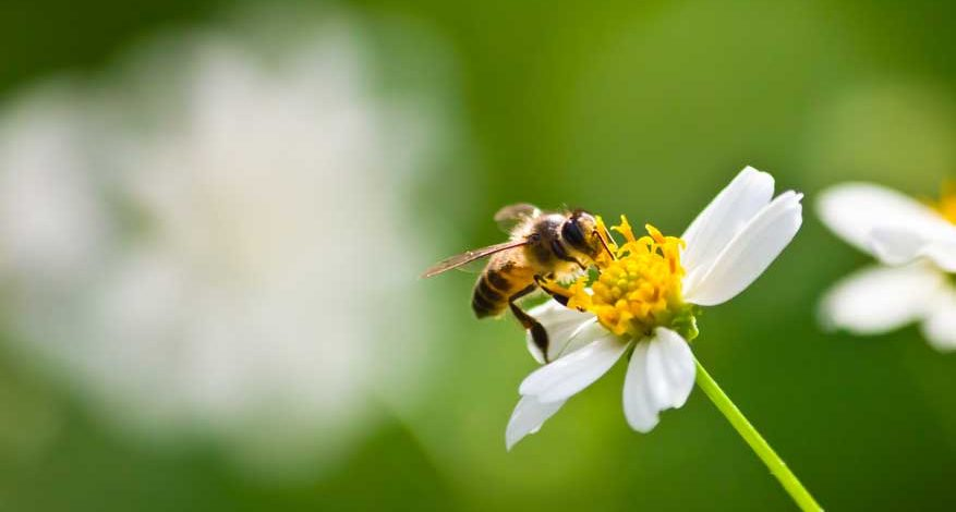 Intervista radio wellness saving bees matteo de simone