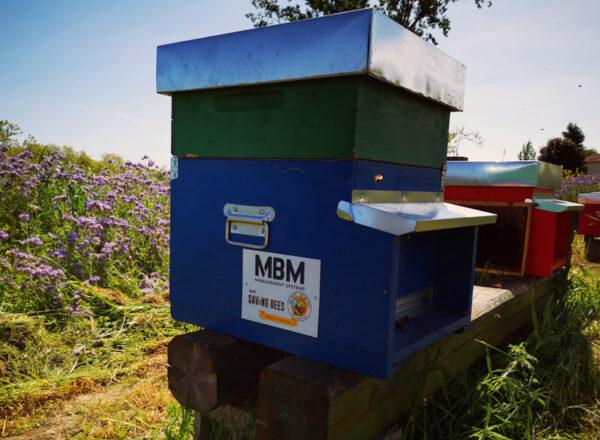mbm partner